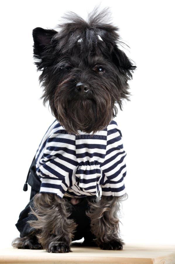 Download Terrier yorkshire стоковое фото. изображение насчитывающей изолировано - 6866916