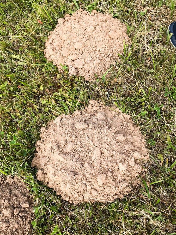 Terriers de terre ronds de taupe Loge des taupes dans la perspective de l'herbe verte Le fond photos libres de droits