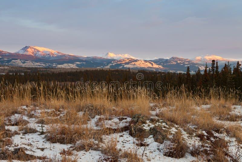 Território yukon Canadá da paisagem da região selvagem do inverno imagens de stock