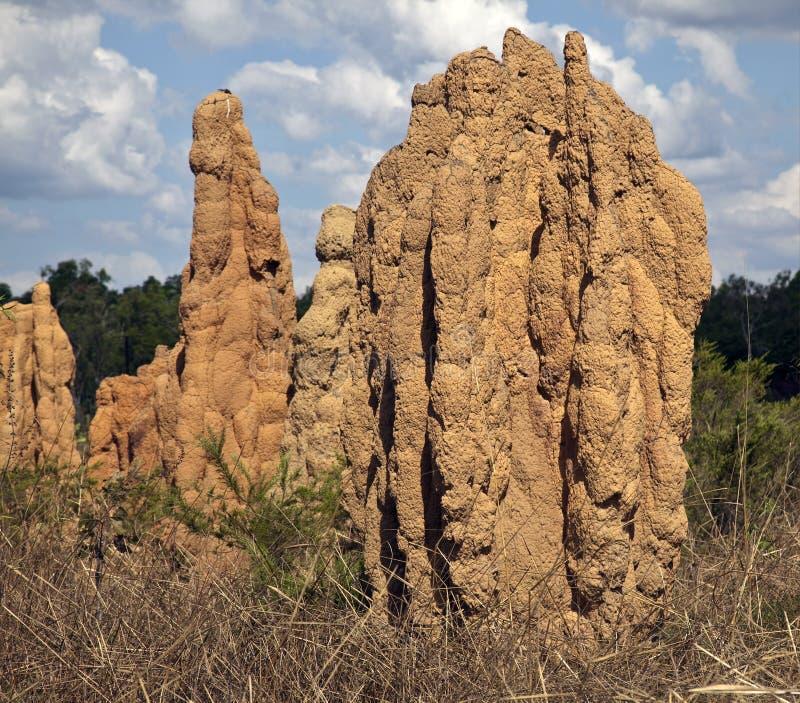 territoire nordique de termite de monticules géants de côtes de fourmi photo stock