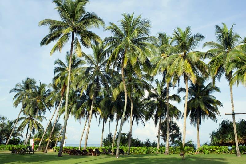 Territorio del centro turístico y del balneario de Avani Bentona del hotel imagen de archivo libre de regalías