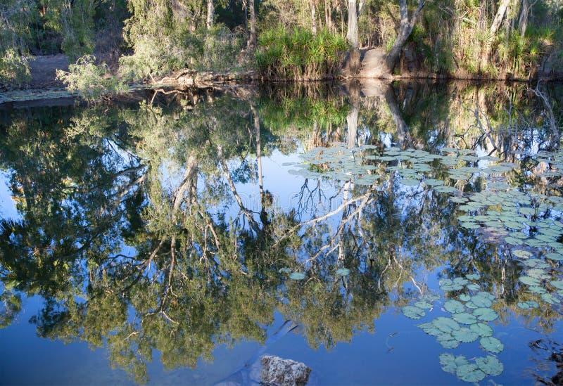 Territorio del Nord amaro di Mataranka delle primavere fotografie stock libere da diritti
