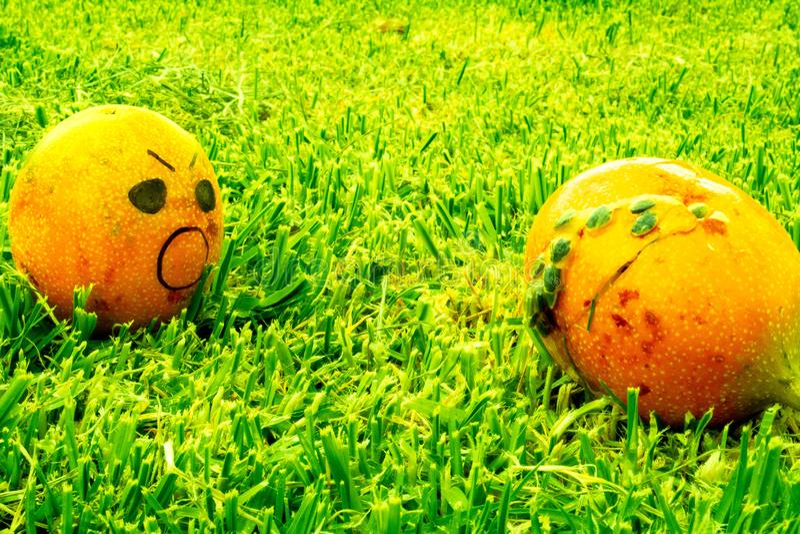 Terror de la fruta comida perdida foto de archivo libre de regalías