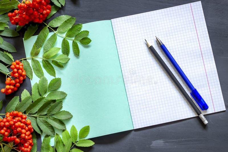Terug naar school: lijsterbessentak, notitieboekje, potloden en pen Het thema van de schoolherfst tegen 1 September stock foto