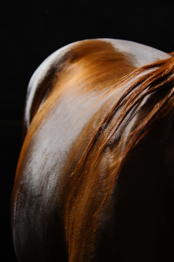 Terug van paard en zijn haar royalty-vrije stock afbeelding