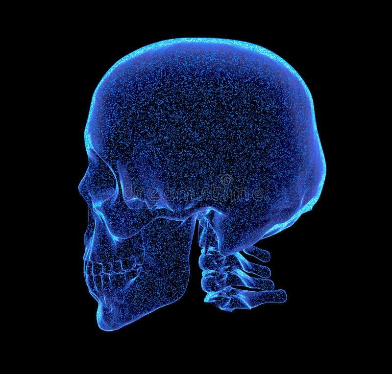 Teruggegeven blauwachtig x-ray beeld van menselijke schedel - schuine projectie, 3D Illustratie vector illustratie