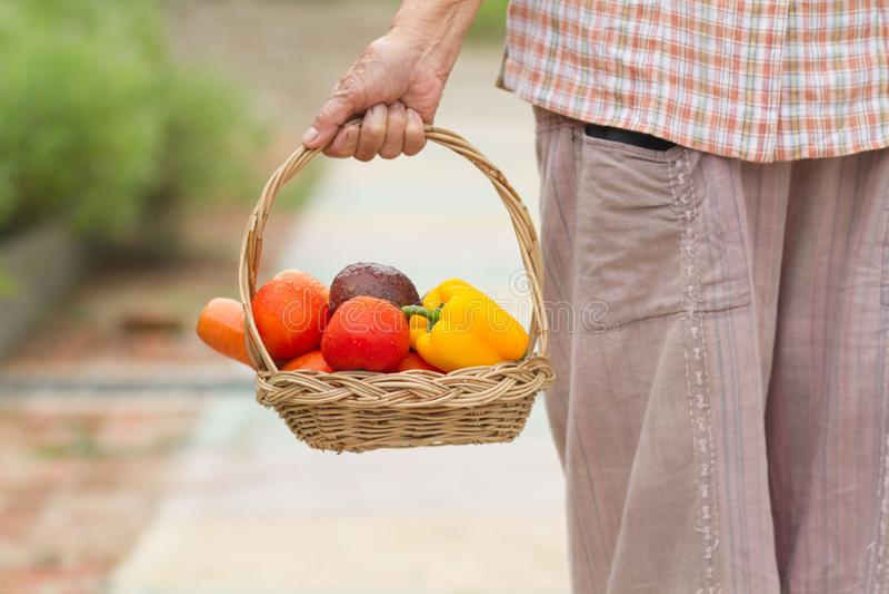 Teruggetrokken hogere vrouw die verse groente en fruit in mand houden die van haar oogst die tuinieren royalty-vrije stock foto's