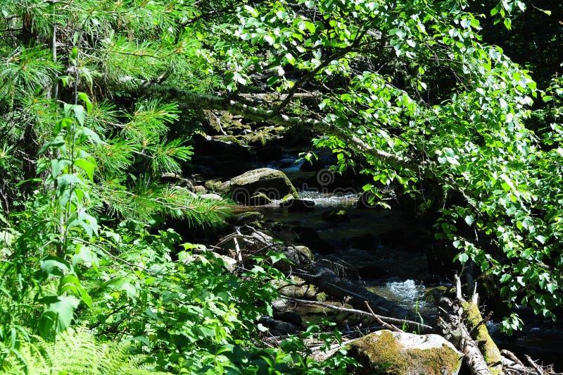 Terzo fiume della torrente montano, la Repubblica di Gorny Altai immagini stock
