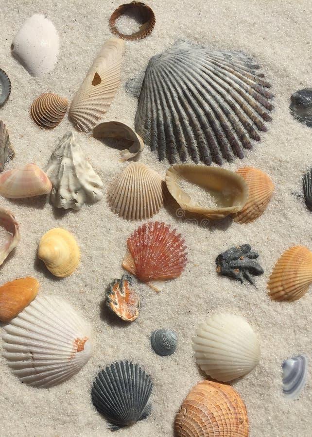 Tesoros de la playa imagen de archivo