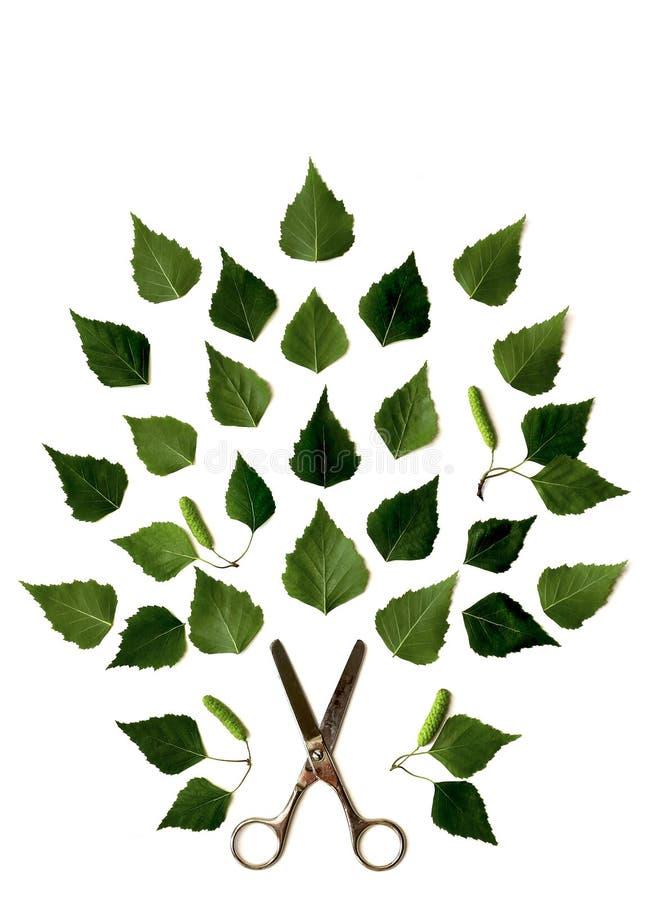 Tesouras velhas e teste padrão verde das folhas do vidoeiro foto de stock