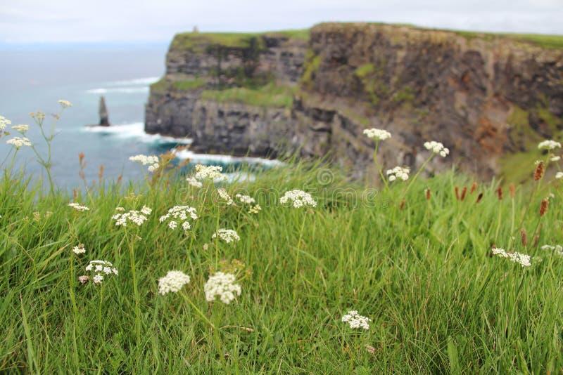 Tesouro em Emerald Isle fotos de stock