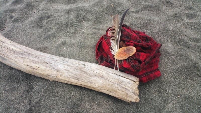 Tesouros de passeio da praia Penas e she& x27 do caranguejo; ll contra a camisa vermelha da flanela da manta fotografia de stock royalty free