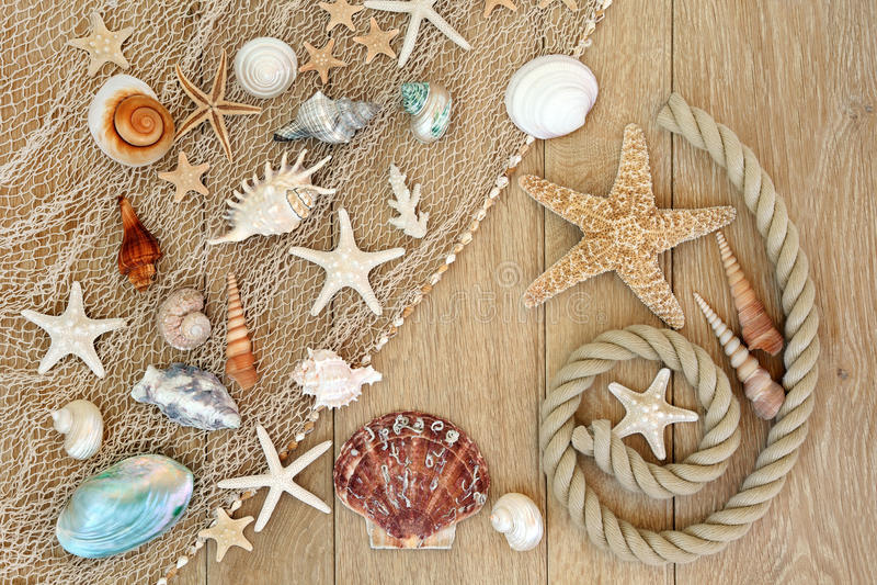 Tesouros do mar foto de stock