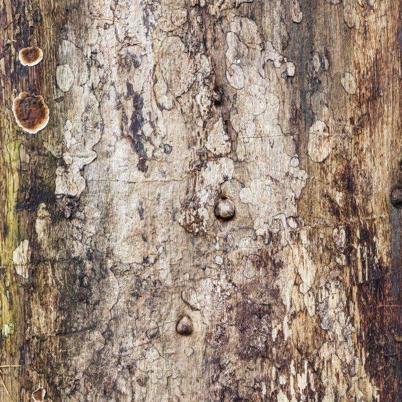 Tessitura del tronco di albero antico fotografie stock libere da diritti