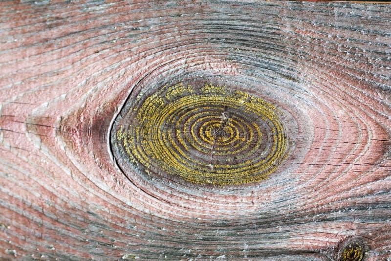 Tessitura in legno Lavandini per rivestimenti Schema di fondo in legno Visualizzazione di anelli di crescita fotografia stock libera da diritti