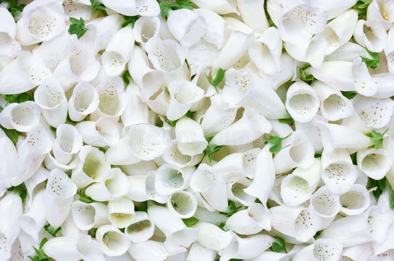 Tessitura posteriore della pasta floreale immagini stock