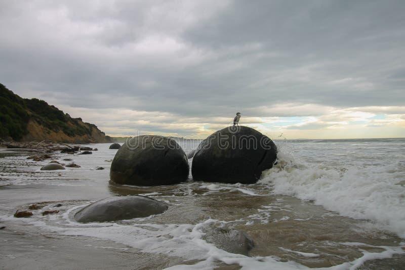 Tessuto felpato che si siede una a Moeraki Boulder in Nuova Zelanda fotografia stock libera da diritti