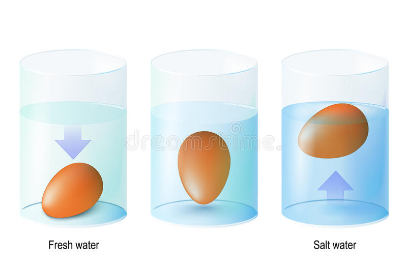 Test egg. Science Experiments and Test Eggs for Freshness in one. Test egg. Egg float. Science Experiments Eggs dropped in fresh and salt water to show the stock illustration