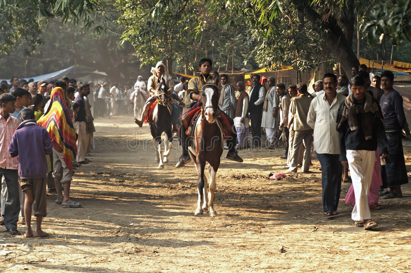 Test Riding Horses In India Editorial Stock Photo