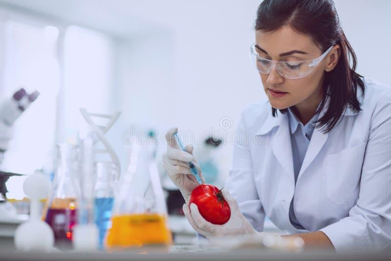 Determined female biologist modifying tomato stock photo