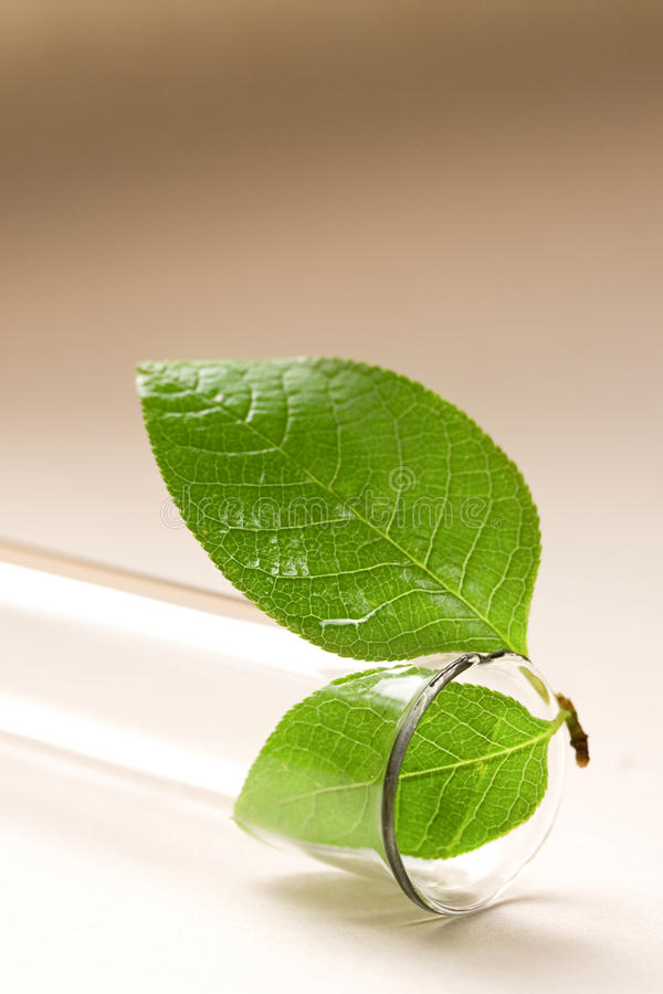 Test tube and leaf stock photography