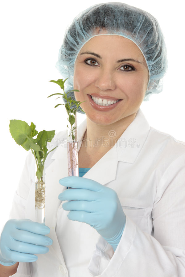 Test tube plants. Scientist holds plants growing in test tubes stock photos
