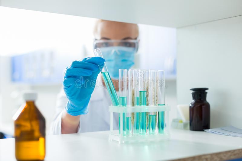 Test tubes with chemical reagents royalty free stock image