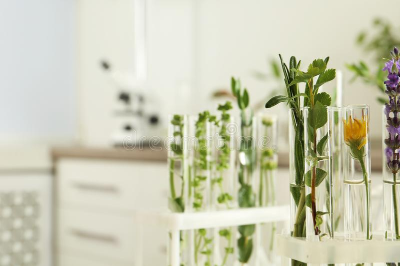 Test tubes with different plants on blurred background. Space for text royalty free stock images