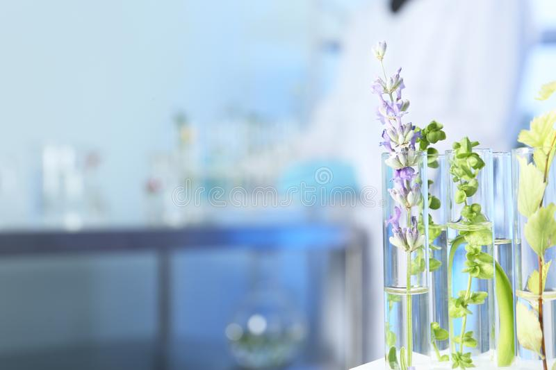 Test tubes with different plants in laboratory. Space for text royalty free stock photos