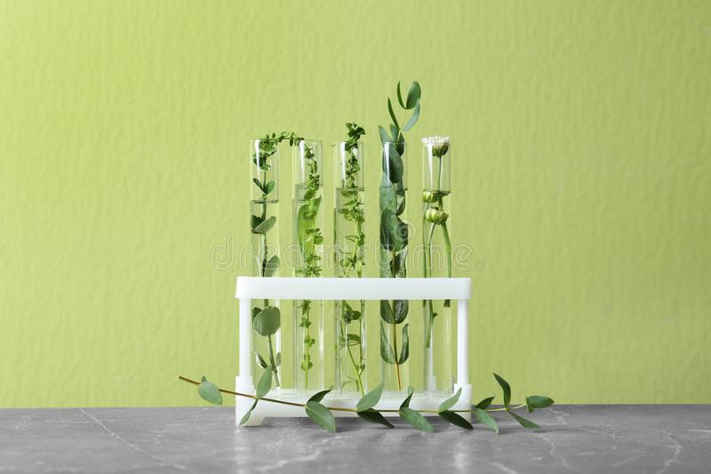 Test tubes with different plants on table against background stock photography