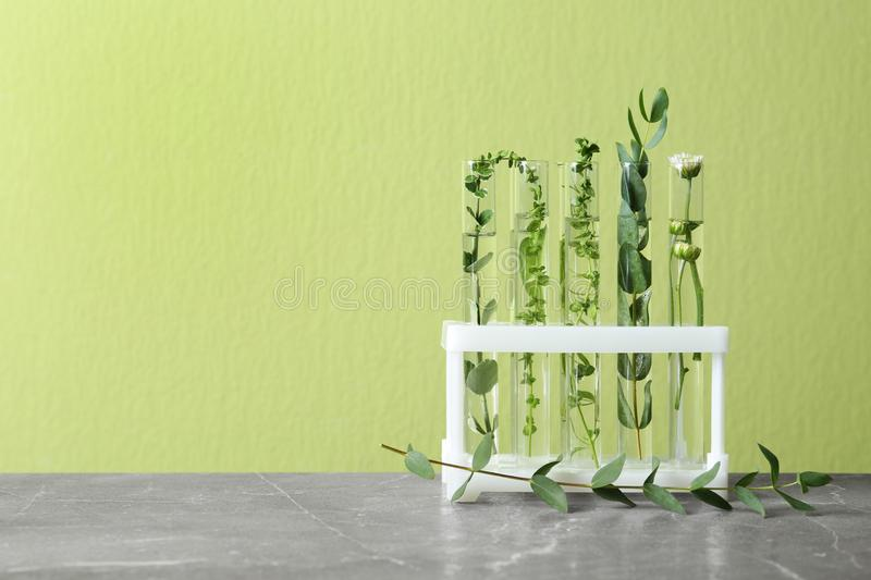 Test tubes with different plants on table against background. Space for text royalty free stock photography