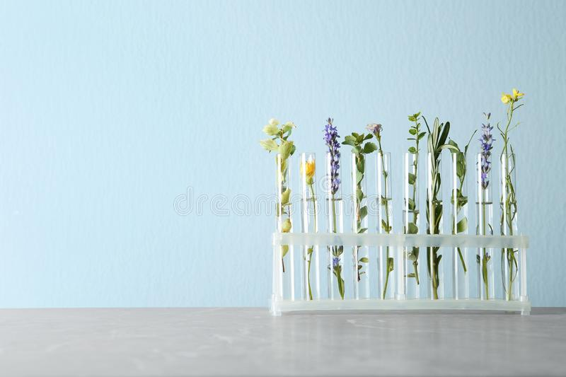 Test tubes with different plants on table against light blue background. Space for text stock photo