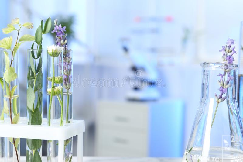 Test tubes and flask with different plants in laboratory, closeup stock images