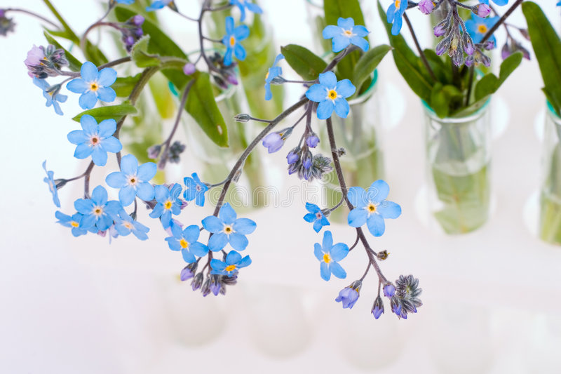 Download Test-tubes with flowers stock photo. Image of glass, nots - 2570786