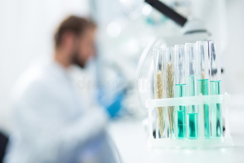 Test tubes with laboratory samples royalty free stock image