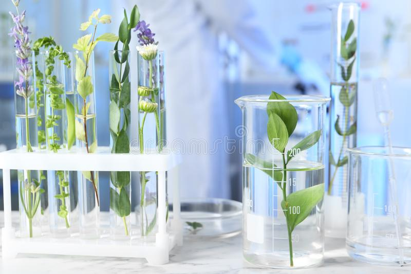 Test tubes and other laboratory glassware with plants on table indoors. Test tubes and other laboratory glassware with different plants on table indoors royalty free stock photography