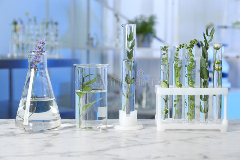 Test tubes and other laboratory glassware with plants on table indoors royalty free stock photos