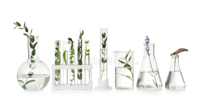 Test tubes and other laboratory glassware with plants on white background stock images