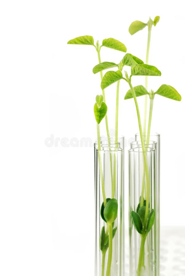 Test Tubes with small plants royalty free stock images