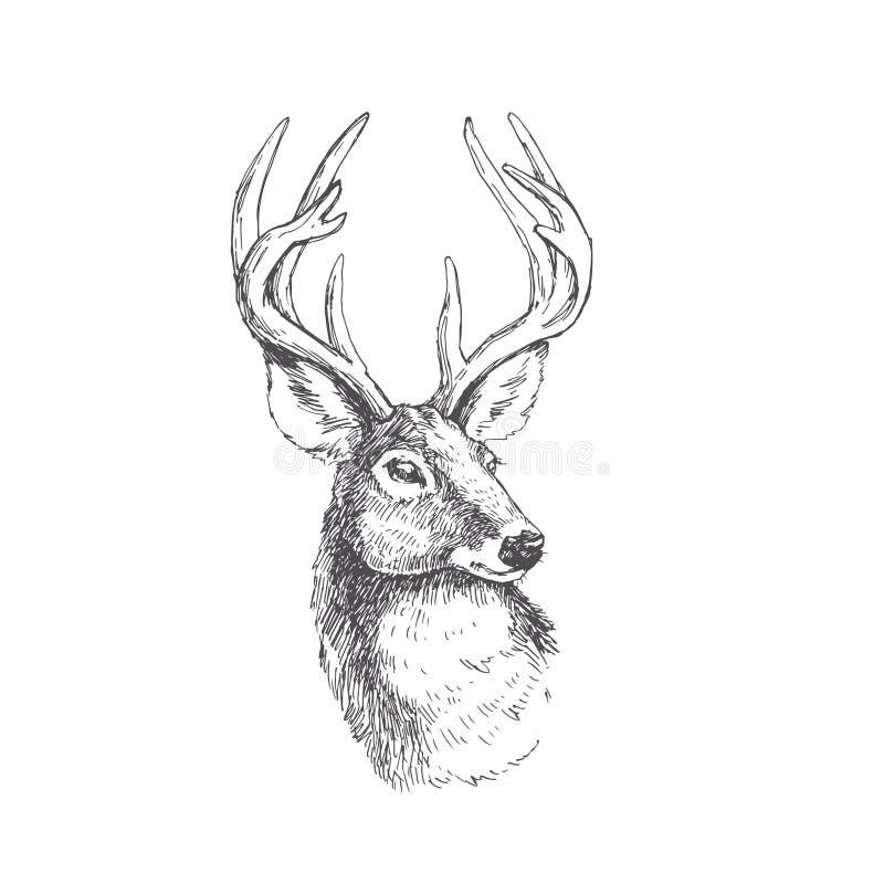 Testa d'annata dei cervi di vettore nello stile dell'incisione Illustra disegnato a mano illustrazione vettoriale