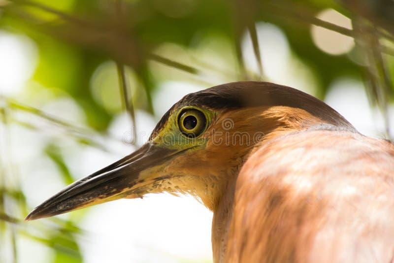 Testa degli uccelli del Brown immagini stock