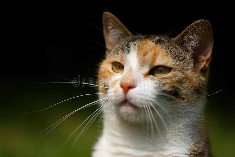Testa dei gatti fotografia stock libera da diritti
