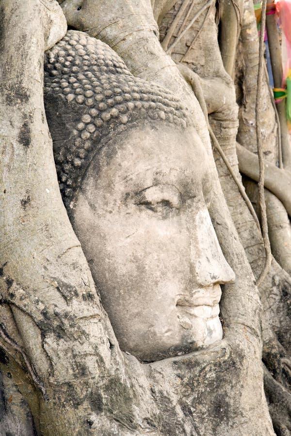 Testa del Buddha nelle radici dell'albero immagini stock libere da diritti