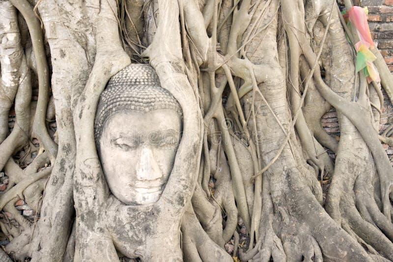 Testa del Buddha nelle radici dell'albero. fotografia stock