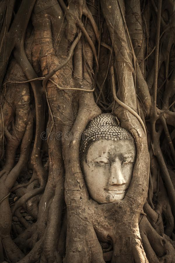 Testa del Buddha nelle radici dell'albero fotografie stock libere da diritti