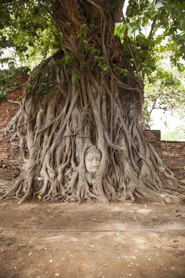 Testa del Buddha in un albero fotografia stock libera da diritti