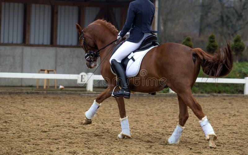 Testa del cavallo di dressage su sfondo naturale immagine stock