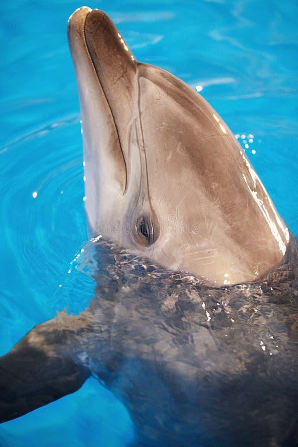 Testa del delfino fotografia stock