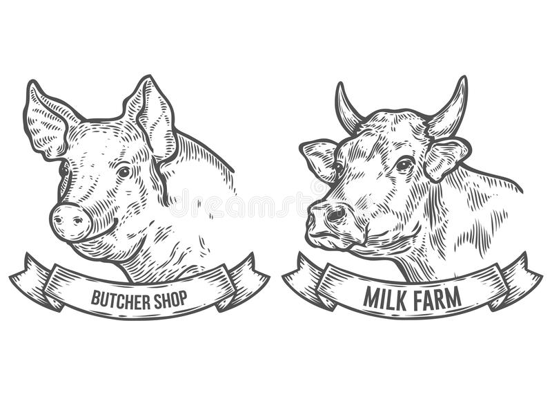 Testa del maiale e della mucca Azienda agricola del latte, di macelleria Schizzo disegnato a mano in uno stile grafico illustrazione vettoriale