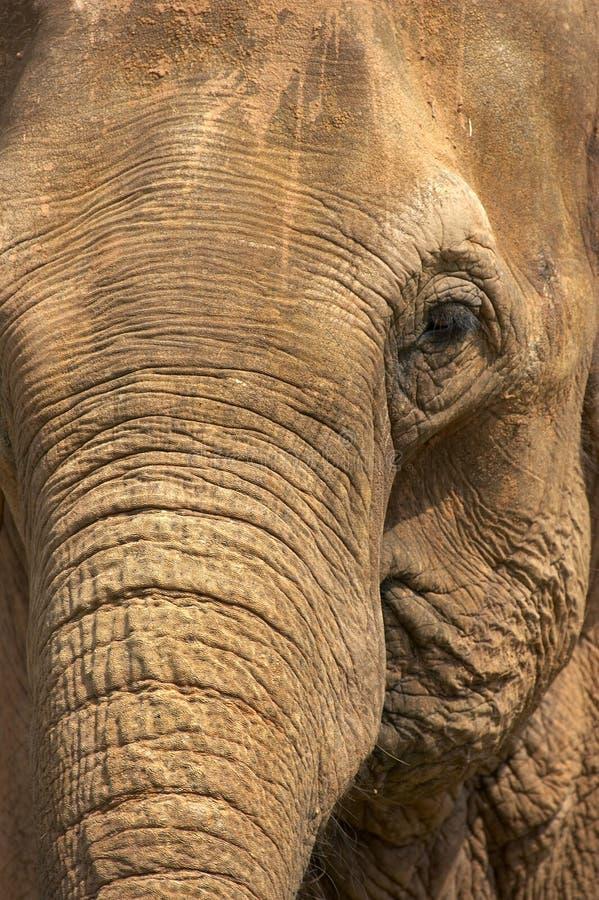 Download Testa dell'elefante immagine stock. Immagine di lento, closeup - 207129